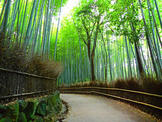 嵐山竹林 / Bamboo Forest in Arashiyama